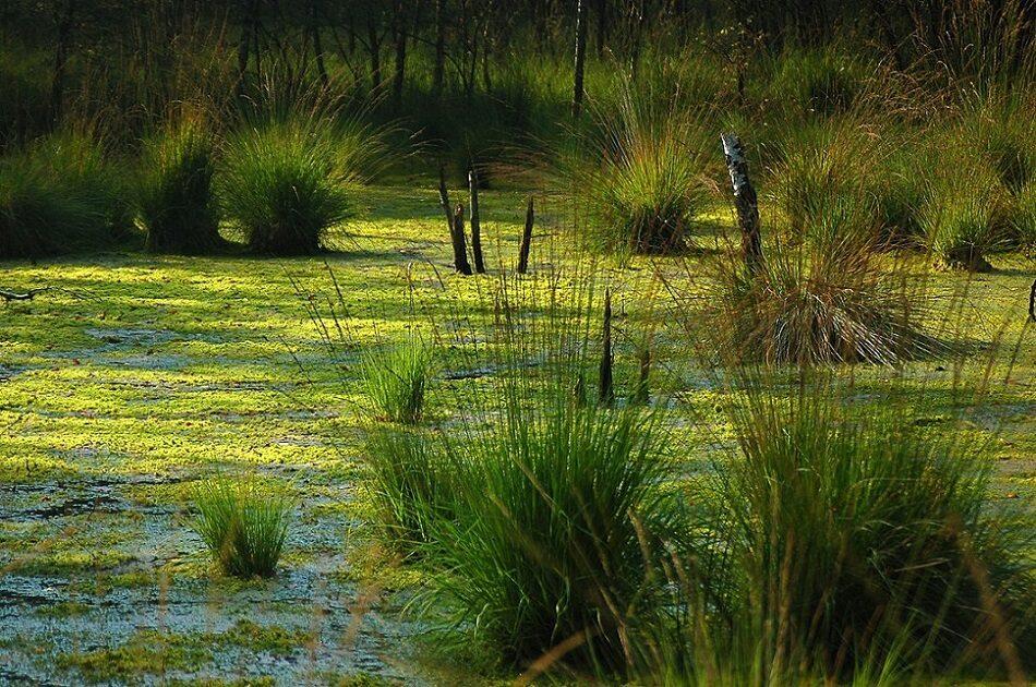 Restaurarea direcționată a zonelor umede ar putea reduce semnificativ poluarea cu azot