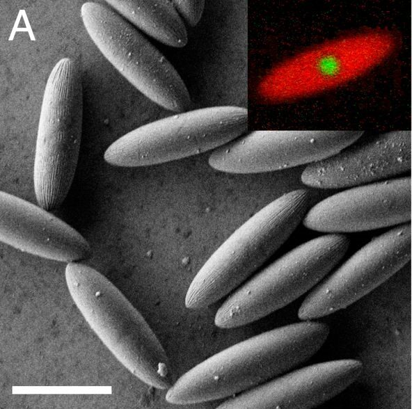 O nouă stare a materiei descoperită de cercetători fizicieni din Germania