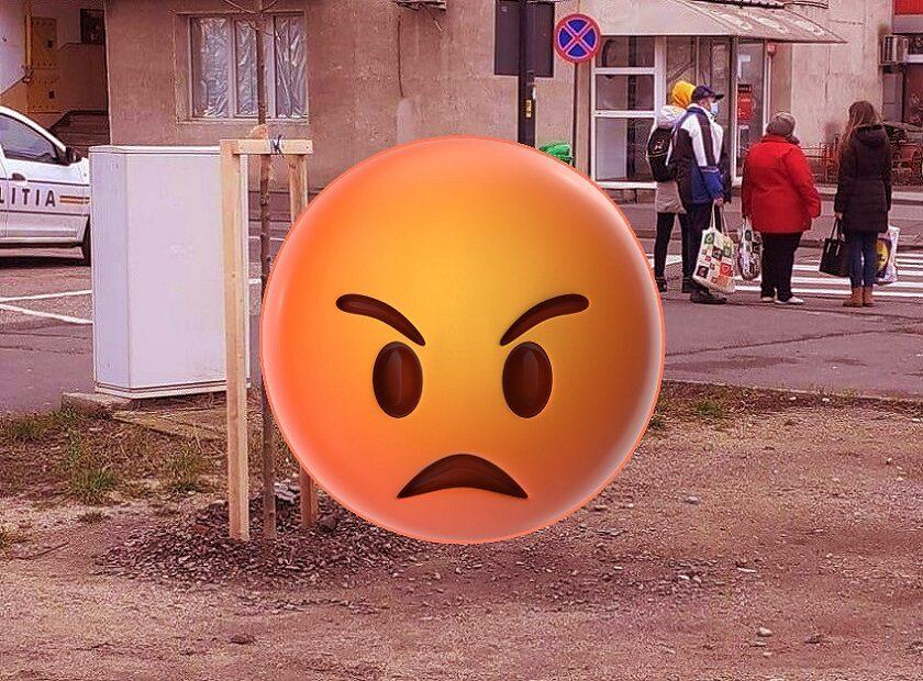 Primăria Arad criticată în mediul online pentru o plantare într-un spațiu necorespunzător