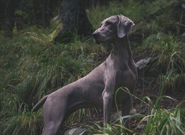 Câinii dau dovadă de conştiinţă de sine şi al propriului corp
